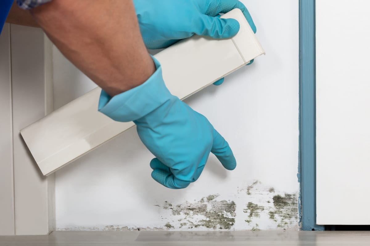 Mold Effects