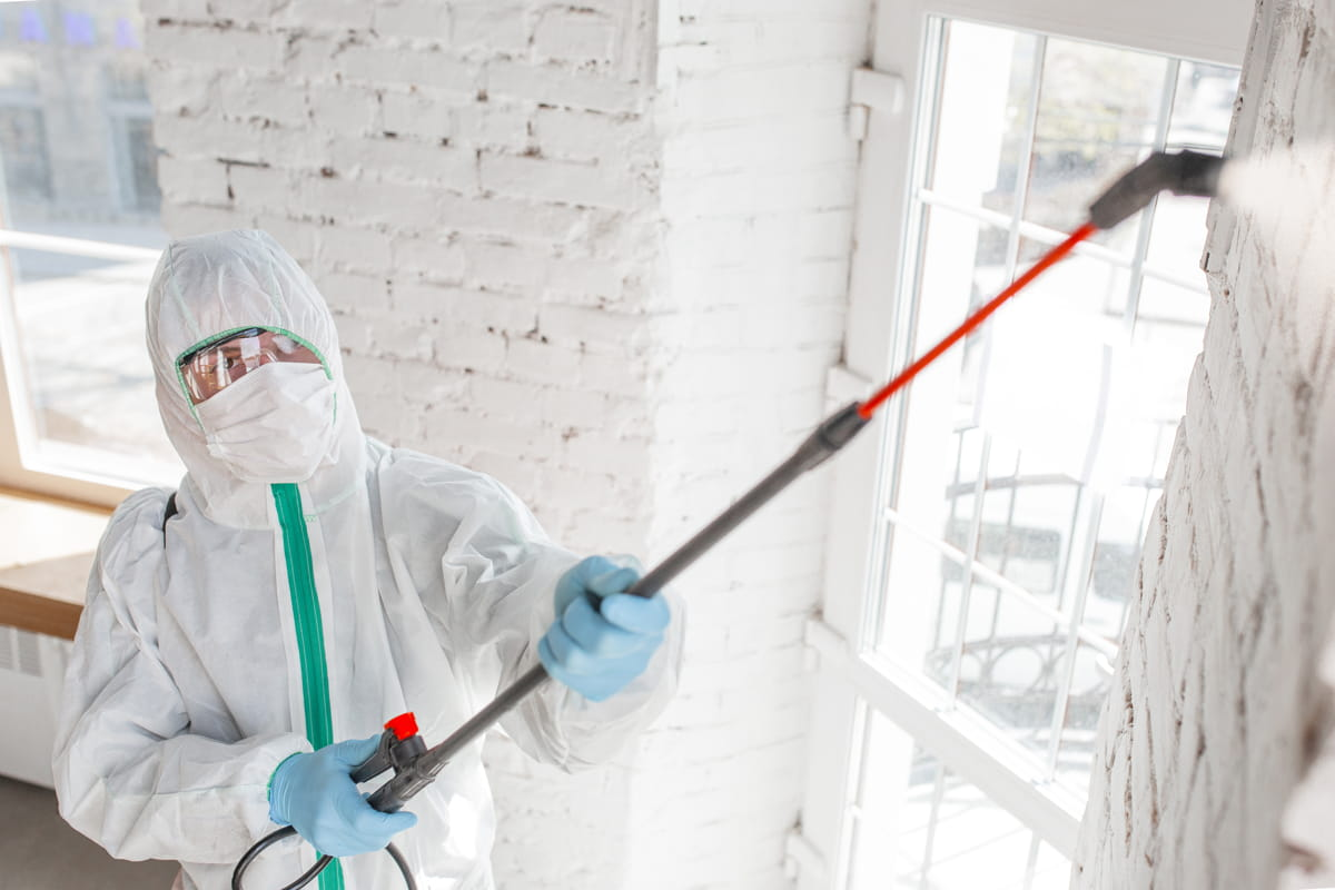 Mold Removal Maintenance