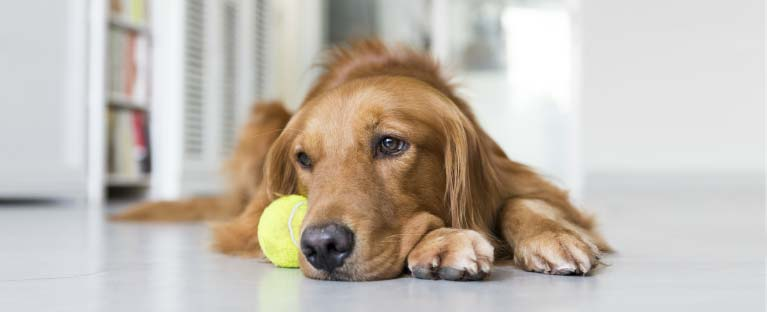 Can Mold Affect My Pets