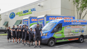 mold-removal-miami-experts