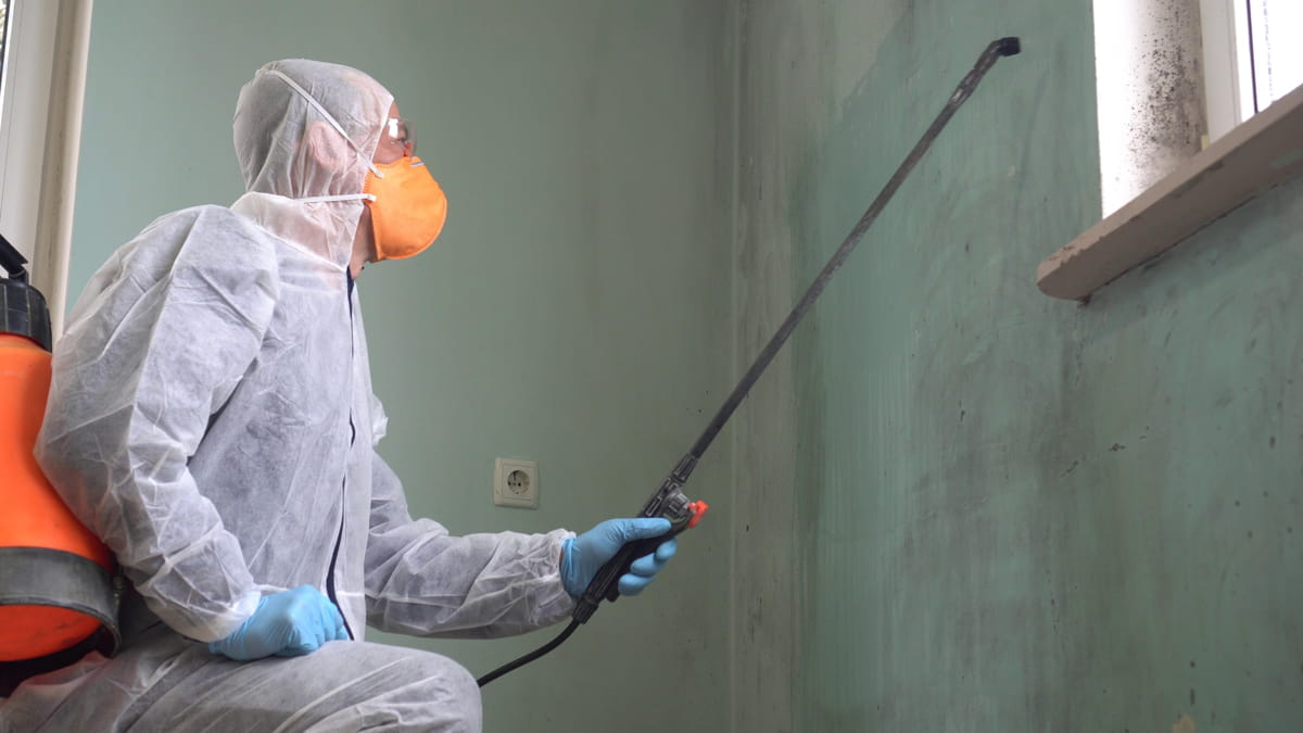 Odor Removal Experts